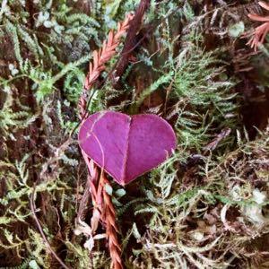 Andy-Swindler-Jedediah-Smith-Redwoods-State-Park-heart-300x300